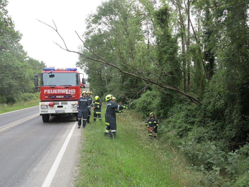 Baum drohte auf Fahrbahn zu stürzen