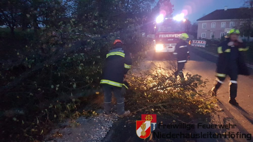 Baum auf Fahrendes Auto geprallt