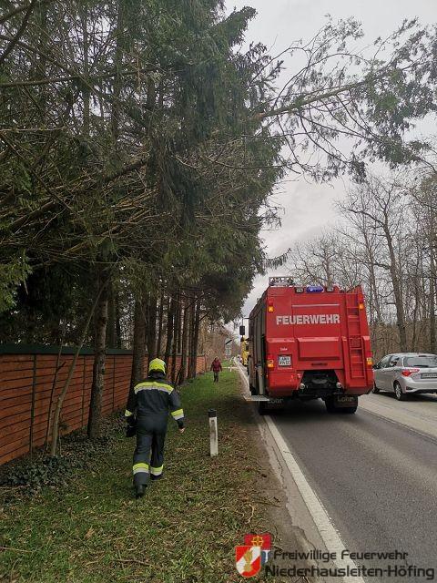 Baum drohte auf Bundesstraße zu stürzen