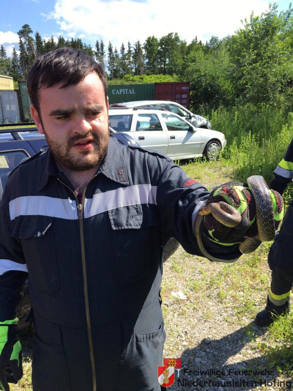 Tierrettung- Schlange in Fahrzeug